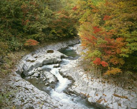 riverside tree: Nakatsukawa ravine Stock Photo
