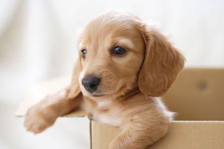 chien: Chien Banque d'images