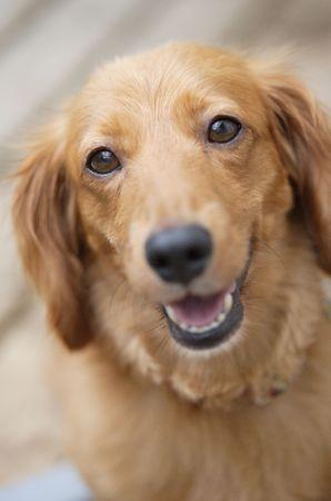 dog: Dog