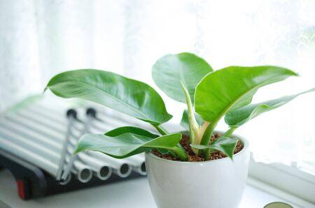 foliage: Foliage plant
