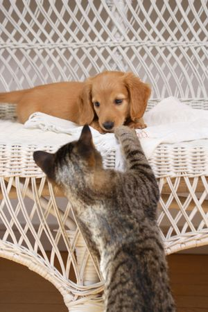 living thing: Dog and cat