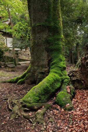 大きな木 写真素材 - 39743907
