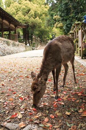 living thing: Deer