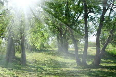 Sunshine Reklamní fotografie