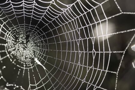 spiders: Spiders thread