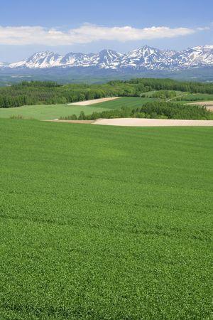 green wheat: Mountain Stock Photo