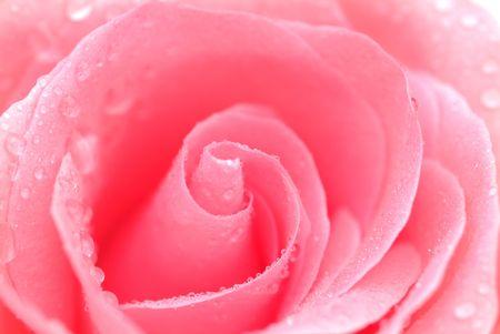 loveliness: Rose