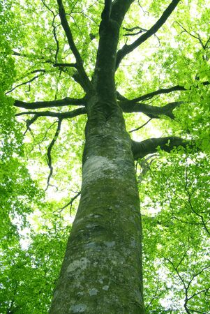 vividly: Large tree