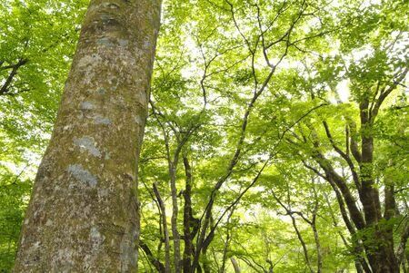 settling: Big tree Stock Photo