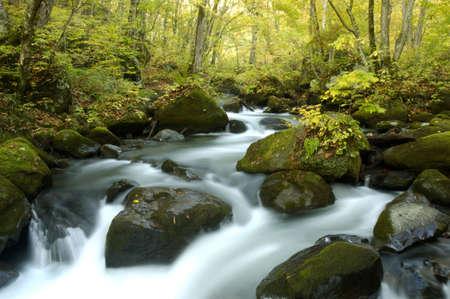Mountain stream of the Oirase valley