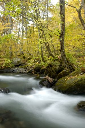 mountain stream: Oirase mountain stream Stock Photo