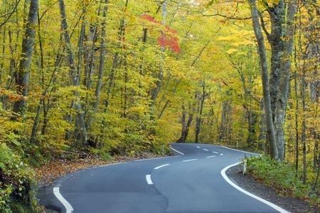 settling: Road of autum tint Stock Photo
