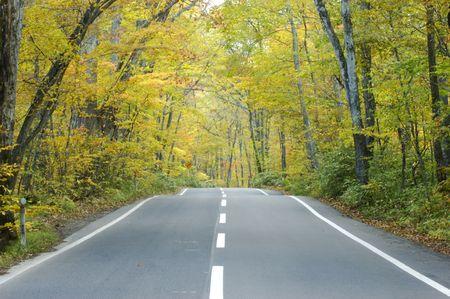 settling: Road of autumn tint Stock Photo