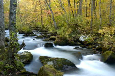 quietness: Mountain stream of the Oirase valley