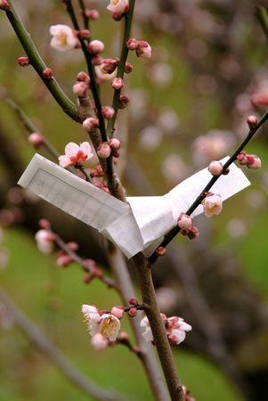 loveliness: Japanese apricot and sacred lot