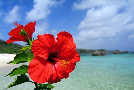 ハイビスカスと海