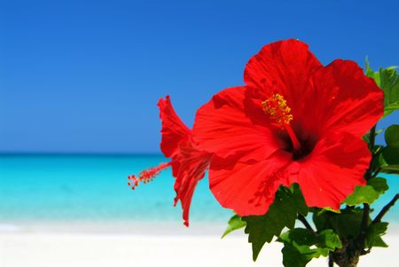 Hibiscus and sea