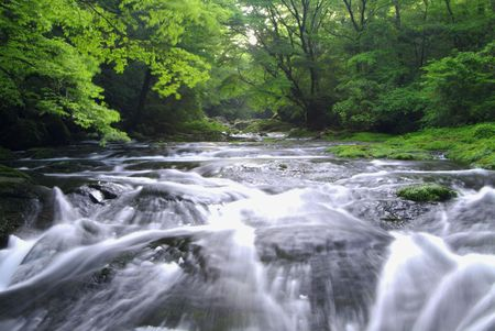 stillness: Kikuchi valley