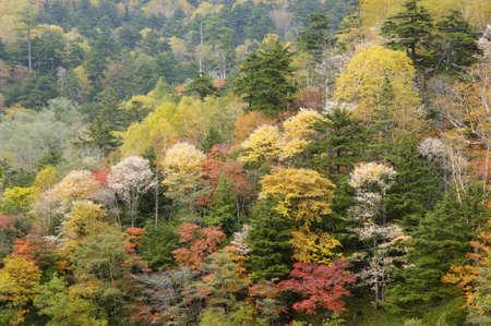 stillness: Forest of autumn tint Stock Photo