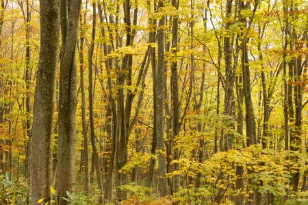 settling: Forest of autumn tint Stock Photo