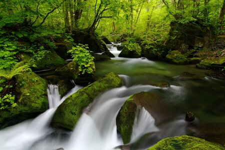 coolness: Mountain stream of the Oirase valley