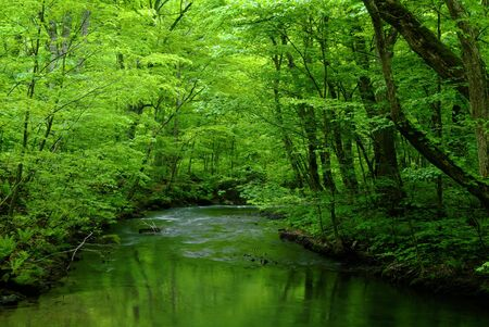 stillness: Oirase mountain stream Stock Photo