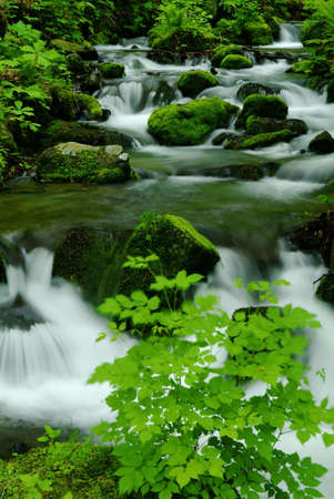 settling: Mountain stream of the Oirase valley