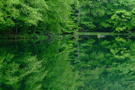 reflects: Fresh green that reflects in marsh Stock Photo