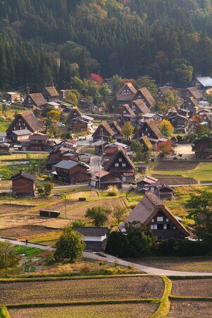 common reed: Shirakawago common reed town village