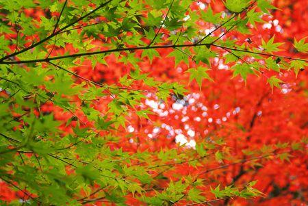 settling: Autumn tint