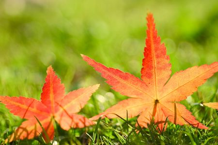 stillness: Maple