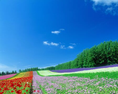 magnificence: Flower field and blue sky