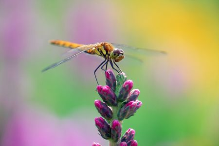 loveliness: Dragonfly
