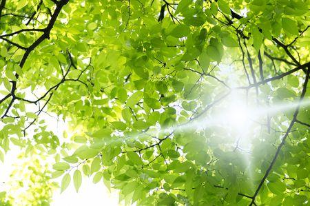 sol radiante: Sol Foto de archivo