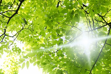Sunshine 版權商用圖片