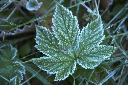 Frost Imagens
