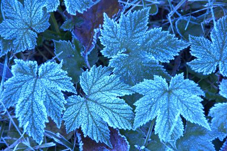 frost: Frost Stock Photo