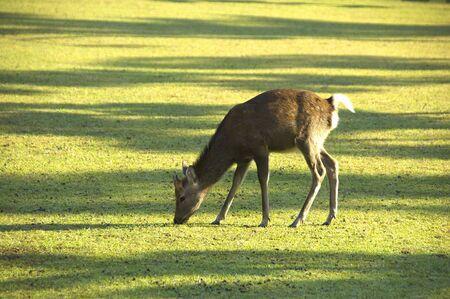 deer  spot: Deer