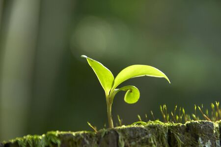 germination: Germinaci�n