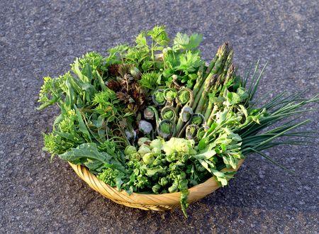 食用の野生植物 写真素材