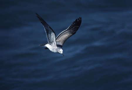 sea gull: Sea gull Stock Photo