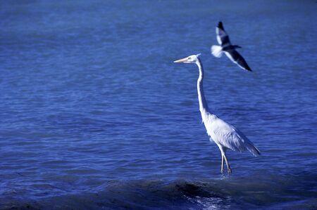 living thing: Waterfowl