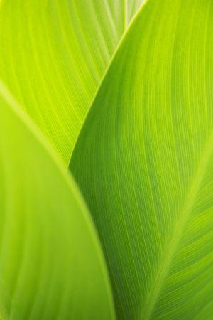 succession: Leaf