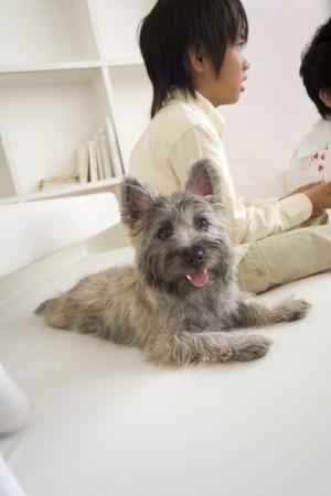 seres vivos: Perro que se sienta en la sala de estar