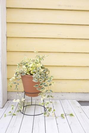 foliage: Foliage plants