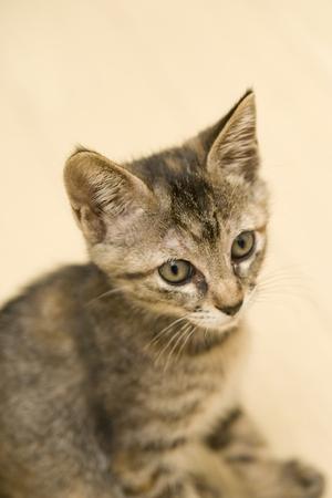 猫 写真素材 - 46191107