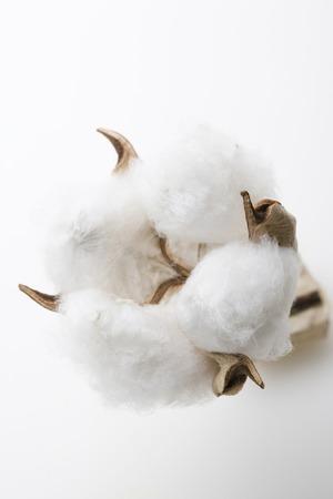 livelihood: Cotton