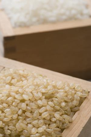 brown: Brown rice Stock Photo