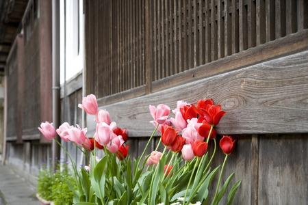 ancient near east: Tulip