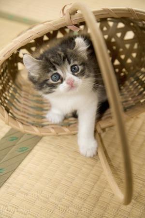 cute kittens: Kitten